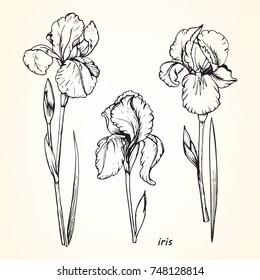 Set of hand-drawn Iris, vector