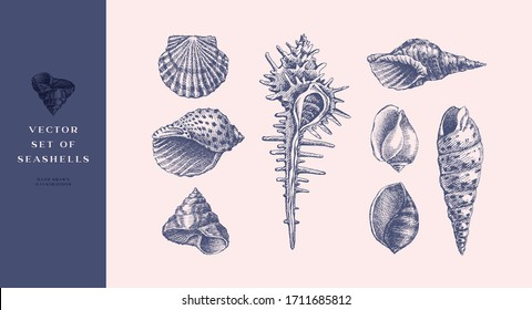 Set of hand-drawn realistic seashells. Shells of mollusks of various forms: coils, spirals, cone, scallops. Oceans nature in vintage style. Vector illustration of engraved lines.