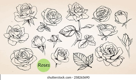 Set of hand-drawn roses, vector