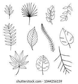 Leaf Outline Images Stock Photos Vectors Shutterstock Pikbest has 3796 tropical leaves design images templates for free. https www shutterstock com image vector set handdrawn tropical leaves 1044256159