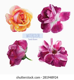 Set of hand-drawn vector watercolor roses. Isolated flowers on a white background