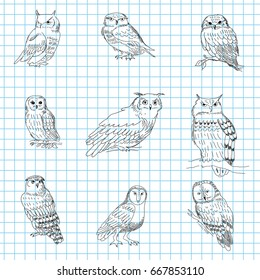 Set of a hand-painted owls on a notebook sheet