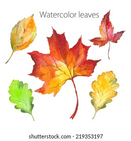 Set of hand-painted in watercolor and brush on paper - beautiful red and yellow autumn leaves - vector illustration