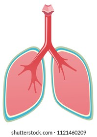 A set of healthy lungs illustration
