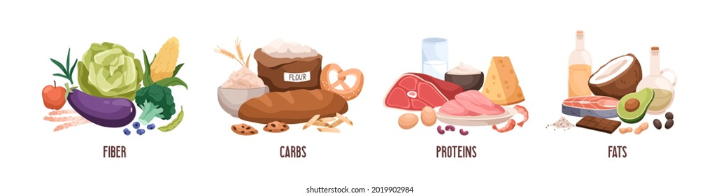 Set of healthy macronutrients. Fiber or cellulose, proteins, fats and carbs or carbohydrates presented by food products. Flat vector illustration of nutrition categories isolated on white background