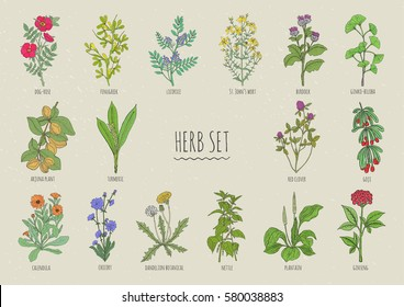 Set of herbs. Collection hand drawn medical, botanical and healing isolated plants. Colorful.