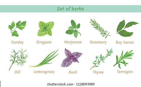 Set of herbs. Collection of vector icons in flat style on white background. Parsley, thyme, oregano, marjoram, dill, lemongrass, tarragon, bay leaves, basil,  rosemary.