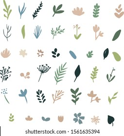 Set of herbs, leaves and flowers for decorating your designs. Isolated vector elements