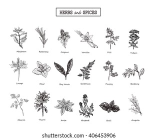 Set of Herbs and spices in sketch style. Vector illustration for your desig. Herbs and spices. herbs and spices art.herbs and spices EPS. Herbs and Wild Flowersn.