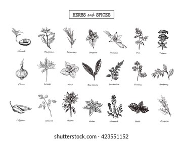 Set of Herbs and spices in sketch style. Vector illustration for your design. Herbs and spices, vegetables, vegetables, Herbs and spices, Set of Herbs and spices. Herbs and spices in sketch style