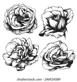 Set of highly detailed hand-drawn roses.