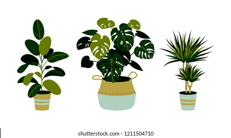 Set of home plants, including ficus, monstera, dracaena isolated on white. Home plants in pots. Interior design elements.