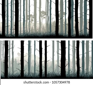 Set of horizontal wide banners of many pine trunks and grass in coniferous forest.