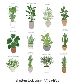 Set of house indoor plant vector cartoon doodle illustration.