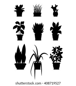 Set of house plant isolated vector flat  illustration. Blackhouse plants in pot for your design.