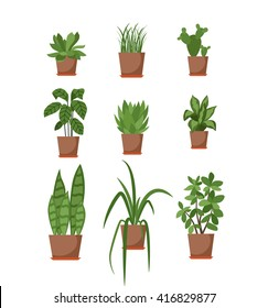 Set of house plant isolated vector flat  illustration. Colorful house plants in pot for your design.
