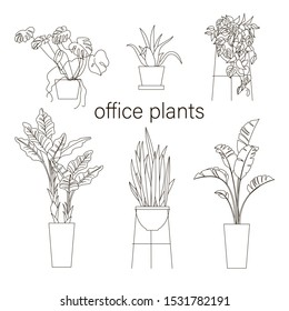 Set of house plant Line drawing vector illustration. Plants in pot for your design.