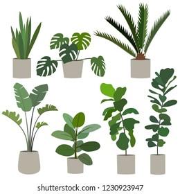 Set of houseplant. Monstera, ficus tree, banana palm, date palm, sansevieria. Vector illustration.