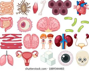 Set of human inner organs isolated on white background illustration