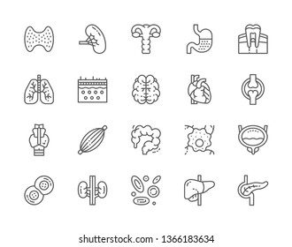 Set of Human Internal Organs Line Icons. Thyroid Gland, Spleen, Uterus, Stomach, Lungs, Brain, Heart, Intestinal Tract, Bladder, Kidneys, Liver, Pancreas and more.