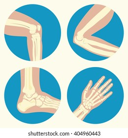 Set of human knee, elbow and ankle joints and wrist, emblem or sign of medical diagnostic center or clinic, flat design, vector