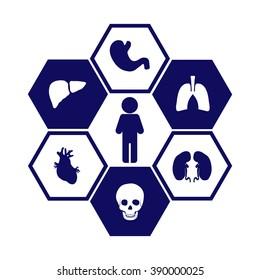 Set of human organs. Medical symbols. Biology. Vector icon.