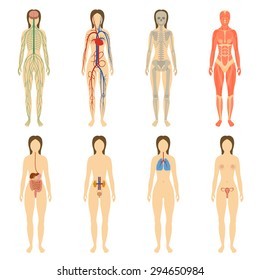 Set of human organs and systems of the body vitality. Vector illustration womens body