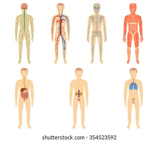Set of human organs and systems of the body vitality. Vector illustration.
