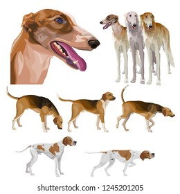 Set of hunting dogs. Scent hounds, sighthounds and gundogs. Vector illustration isolated on white background