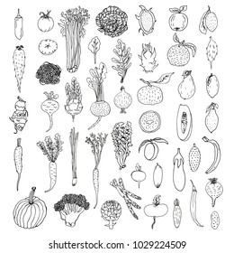 A set of illustrated fruits and vegetables such as cucumber, dragon fruit, peach, potato, lattice, pumpkin, carrot, mango,broccoli, eggplant, cabbage, parsnip, radish in sketch doodle cartoon style