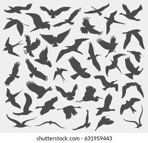 set of illustration of silhouettes of birds
