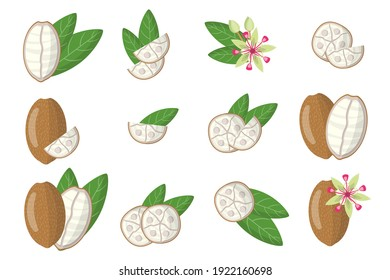 Set of illustrations with Cupuacu exotic fruits, flowers and leaves isolated on a white background. Isolated vector icons set.