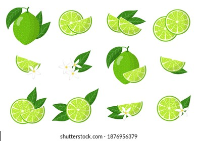 Set of illustrations with lime exotic fruits, flowers and leaves isolated on white background. Isolated vector icons set.