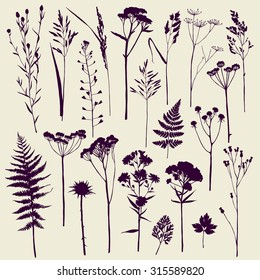Set of illustrations of plants. Herbarium. Silhouettes. Sketch. Freehand drawing.