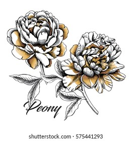 Set with image gold Peony flowers on a white background. Vector illustration.