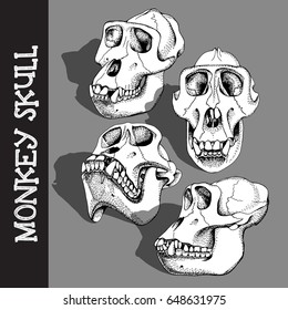 Set with image of a Monkey Skull. Vector illustration.