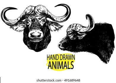 Set of images of a buffalo head. Figures from the hand of ink. Figures in vintage style. Animals of Africa.