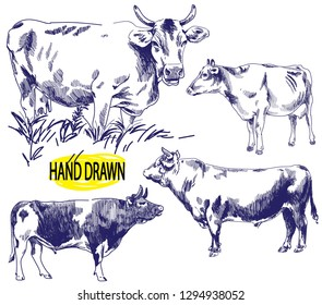 Set of images of a cow. Image set of farm animals. . Vintage style image, vintage image. Freehand drawing. Meat and milk.