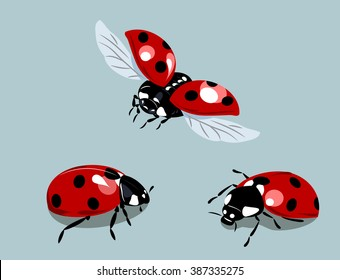 set of images of ladybirds