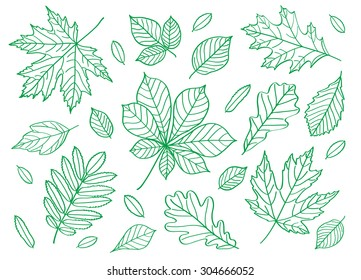 Set of images of leaves of different trees. Hand drawing summer leaves. Sketch, design elements. Vector.