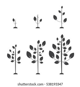 Set of images of trees from the germ to the big tree. Vector illustration. Flat style