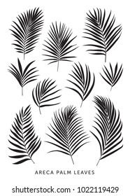 Set of individual palm leaves. Botanical vector illustration. Tropical leaves isolated on white background.