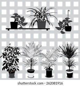 Set of the indoor plants in the pots. Monochrome vector.