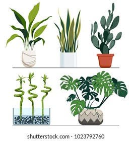 Set of indoor plants in pots. Vector hand drawn illustration. Modern and elegant home decor