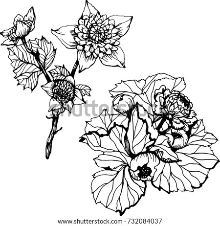 Set ink black white flowers pattern stock vector royalty free set with ink black and white flowers pattern with flowers hand drawing flowers for mightylinksfo