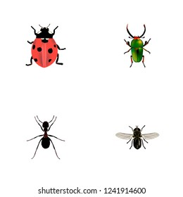 Set of insect realistic symbols with fly, pismire, beetle and other icons for your web mobile app logo design.