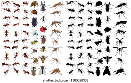 set of insects, beetles, ants