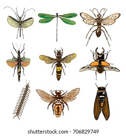 Set of insects bugs beetles and bees, fleas, many color species in vintage old hand drawn stipple shading, hatching engraved style. Vector.