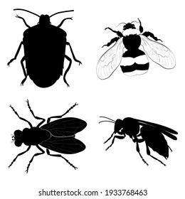 Set with insects isolated on white background. Bumblebee, Crum, Hornet and Housefly.  Element for design. Vector.