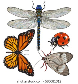 Set of insects like dragonfly, butterfly, ladybird and moth, sketch style vector illustration isolated on white background.